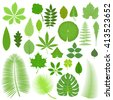 Vector tropical set leaves. Collection green tree leaves. Natural green leafs set. Leafs set element floral color garden art. Tropical leaves collection. Natural green tropical set leaves. Flat leafs. - stock vector