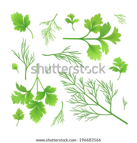 Vector twigs of parsley and dill - stock vector