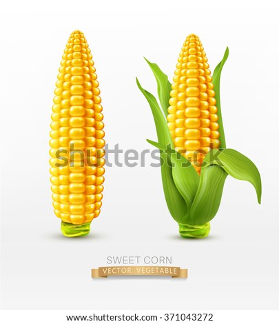 Vector two corn. corn on the cob with leaves. design element - stock vector