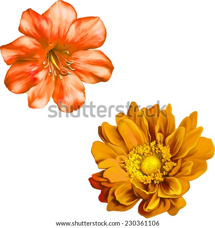 Vector very beautiful bright orange flower, Beautiful bright orange Flower. Isolated on white. Vector Illustration, Spring flower.Isolated on white background. - stock vector