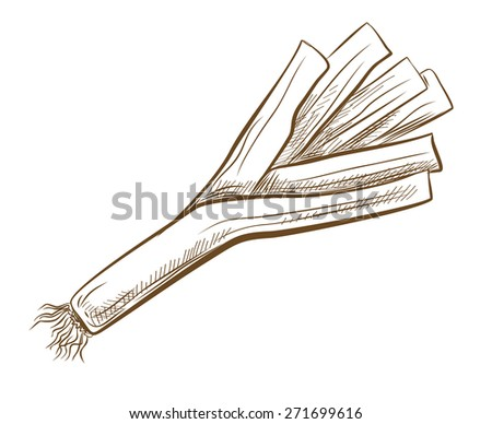 vector vintage hand drawn picture of ripe leek
