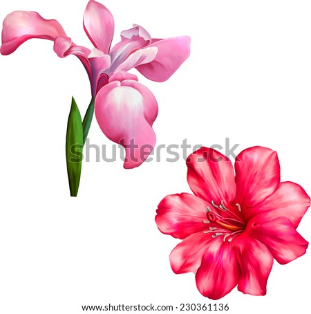Vector violet iris flower isolated on white background, illustration, of a pink iris blossom with bud, Beautiful bright pink red Flower. Isolated on white. Vector Illustration on a white background.