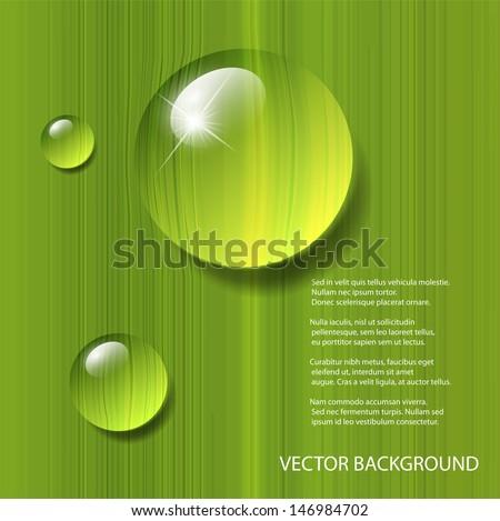 Vector water drops on green leaf macro - stock vector
