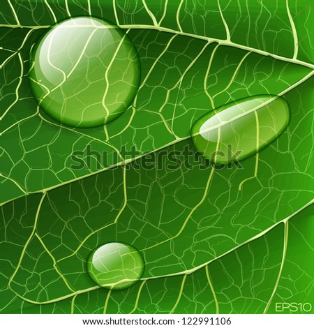 Vector water drops on green leaf macro background - stock vector