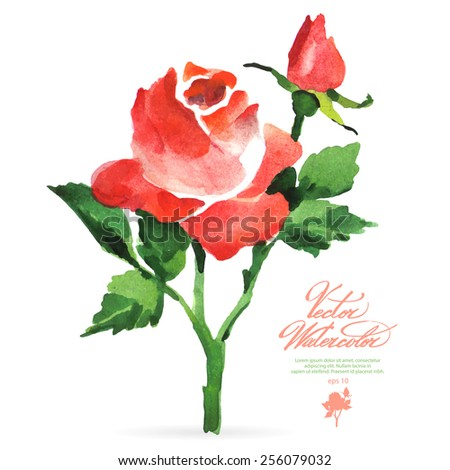 Vector watercolor flower on white backdrop. Isolated beautiful red rose and bud. - stock vector