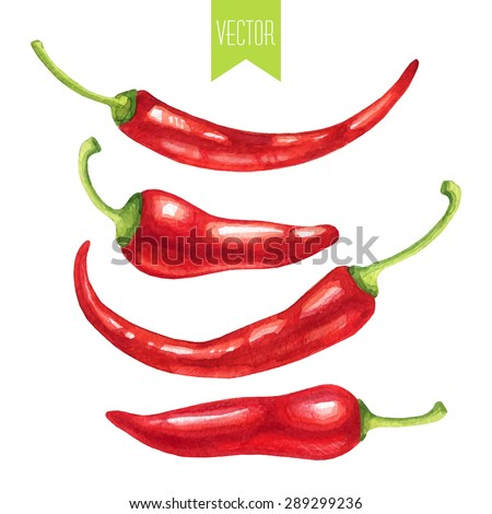 Vector watercolor hand drawn set of fresh organic red hot chili peppers on a white background - stock vector