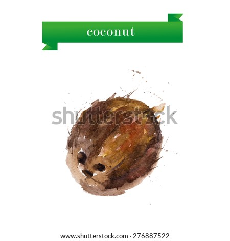 Vector watercolor illustration of coconut on white background. Good for magazine or poster design. - stock vector