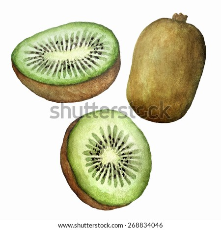Vector watercolor kiwi set. Hand drawing. Isolated on white.