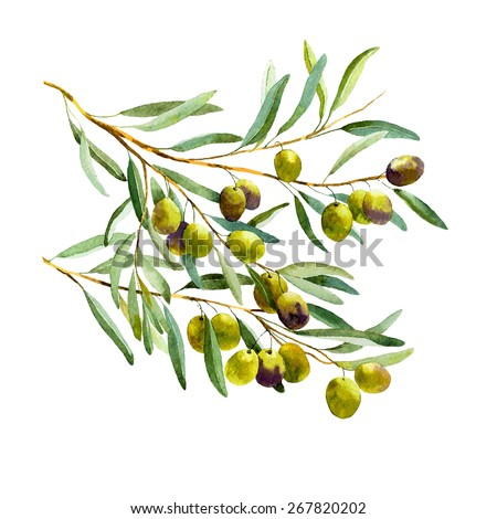 vector watercolor olive branch on white background
