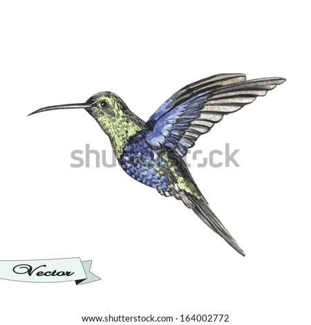 Vector watercolor sketch bird hummingbird. Vector illustration for greeting cards, invitations, and other printing and web projects. - stock vector