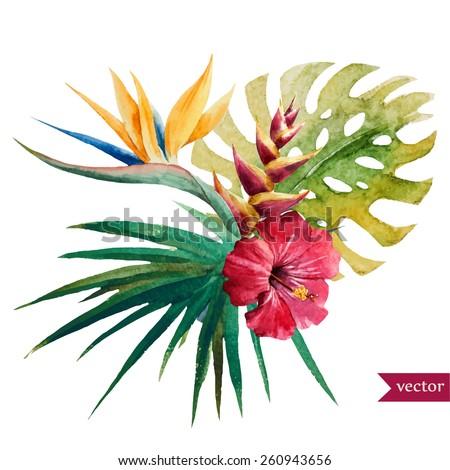 vector, watercolor, Strelitzia,, hibiscus, jungle, palm trees, flowers, composition - stock vector