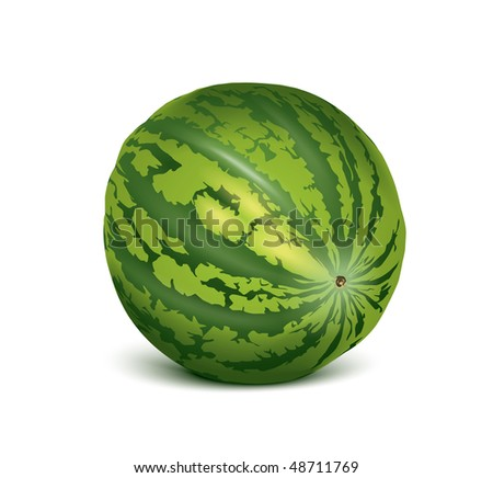 vector watermelon - stock vector