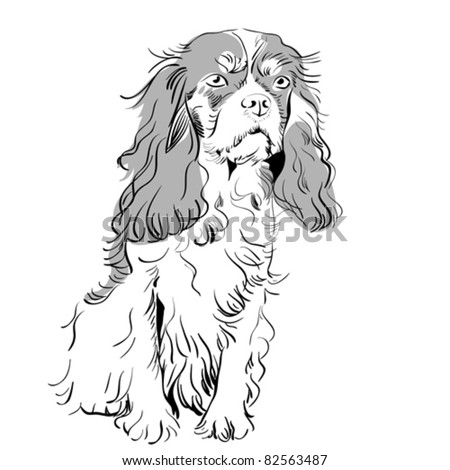 vector white and black sketch of the dog breed Cavalier King Charles Spaniel