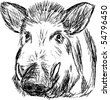vector - wild boar , hand draw, isolated on background - stock photo
