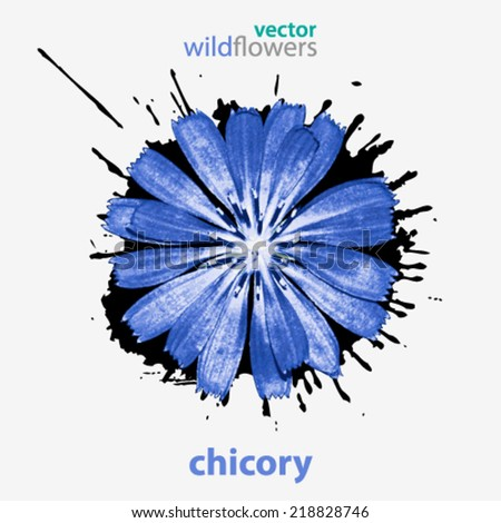 Vector wildflower, chicory background illustration - stock vector