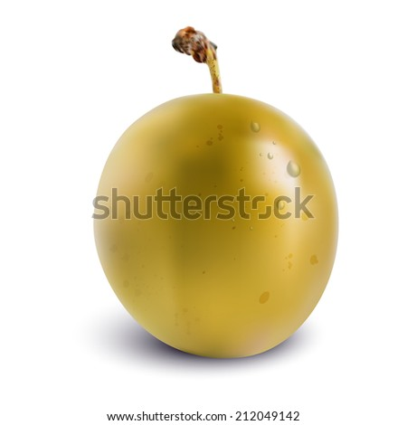 Vector yellow plum with isolated on white background