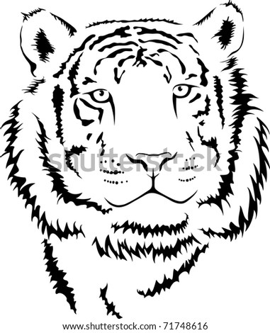 vector young tiger
