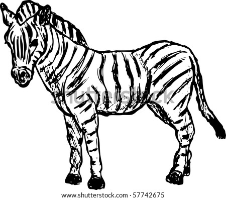 vector - zebra standing isolated on background