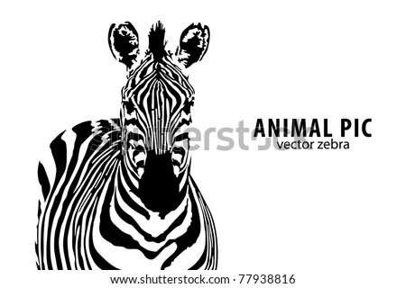 vector zebra with place for text - stock vector