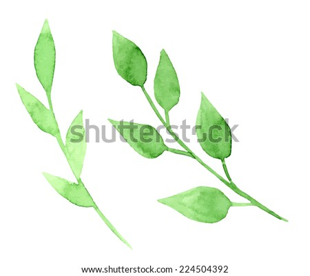 Vectorized watercolor hand drawing floral theme - Two green branches with leaves - stock vector