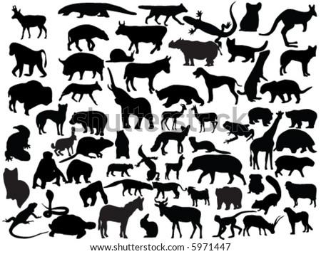 Vectors of animals - stock vector