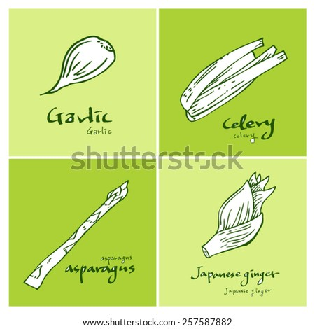 Vegetable and fruit illustrations / Hand drawn food ingredients - vector