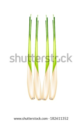 Vegetable and Herb, Vector Illustration of A Row of Fresh Lemon Grass for Seasoning in Cooking.