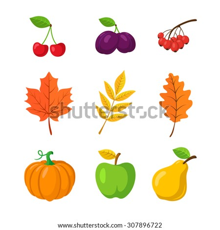 Vegetables, fruits and leaves. Autumn design elements. Vector symbols isolated on white. - stock vector