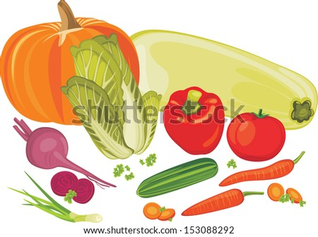 Vegetables isolated on the white. Vector - stock vector