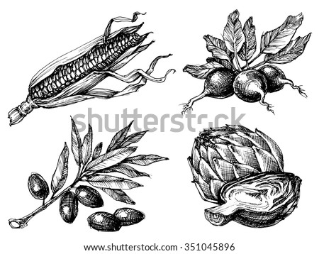 Vegetables set, isolated drawings black over white, etch style. Corn, radish, olives and artichoke - stock vector