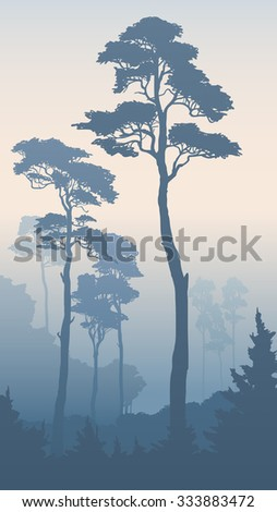 Vertical illustration of morning coniferous forest with tall pines (in blue tone). - stock vector