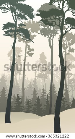 Vertical illustration of winter coniferous forest with tall pines. - stock vector