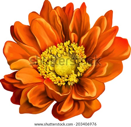 very beautiful bright orange flower - stock vector