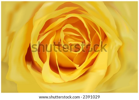 Very detailed close-up of yellow rose -VECTOR