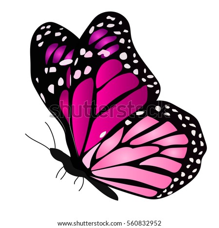 Colourful Butterfly Stock Images Royalty Free Images