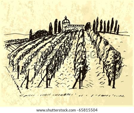 Vineyard. Bottle label. - stock vector