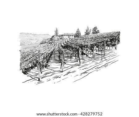 Vineyard landscape vector sketch design. Hand drawn illustration - stock vector