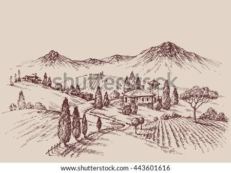 Vineyard sketch. Wine label design. Rural landscape drawing - stock vector