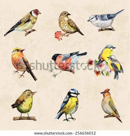vintage a collection of birds. watercolor painting - stock vector