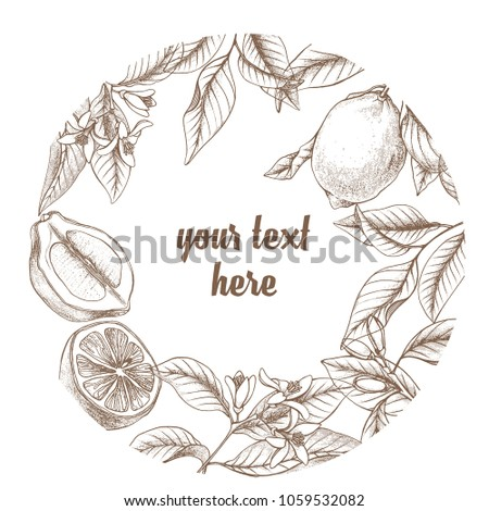 Vintage Botanical Lemon Circle Wreath Frame Background Hand Drawn Outline Vector Floral Border