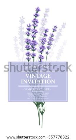 Vintage card with lavender flower. Vector illustration EPS10 - stock vector