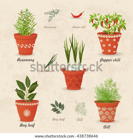vintage collection of different herbs planted in ceramic pots and fresh herb leaves and spices for your design - stock vector
