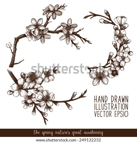 Vintage collection of vector hand drawn blooming fruit tree twig isolated on white. Cherry tree twig sketch set - stock vector