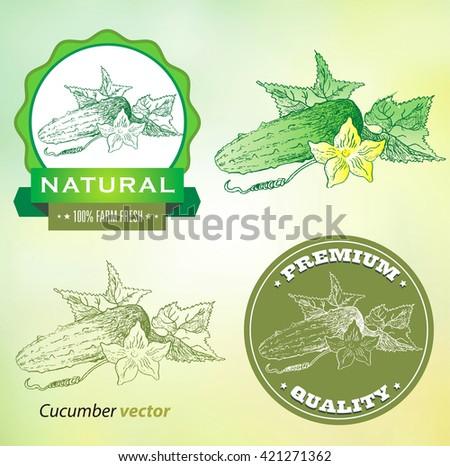 Vintage Cucumber Labels. - stock vector