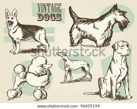Vintage Dogs/Classic Retro Ornate Dog Collection - stock vector