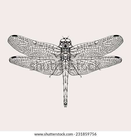 Vintage dragonfly isolated black silhouette vector drawing  - stock vector
