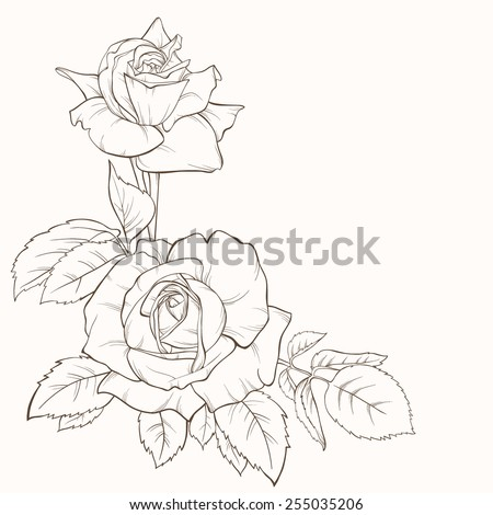 Vintage elegant vector card with a bouquet of rose flowers. Blossoming roses. Vector illustration. Perfect background for wedding, birthday, Valentine's Day, Mother's Day. - stock vector