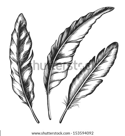 Vintage feather set isolated on white background. Hand drawn vector illustration. - stock vector