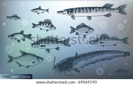 vintage fish set - stock vector