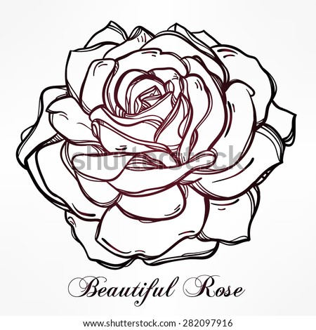 Sketch Rose Hand Drawn Realistic Flower Stock Illustration